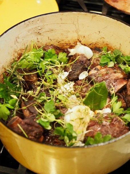 Short ribs in gold dutch oven with herbs tucked all around, plus garlic tucked in too.