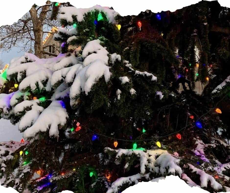 Snowy pine tree with colored christmas lights