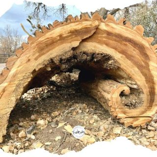 image of a gnarled potion of a giant downed tree trunk