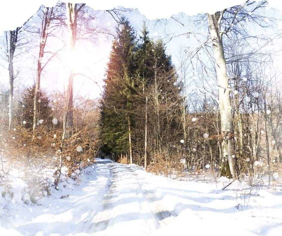 snow winter trail with trees and sunshine
