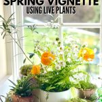 Pin for DIY Spring Vignette using live plants with image of tray filled with 4 different small potted plants and a vase of flowers with moss around the base.