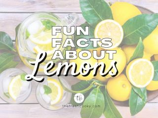 Fun facts about Lemons with image of table full of lemons with leaves and a large pitcher of lemon water.